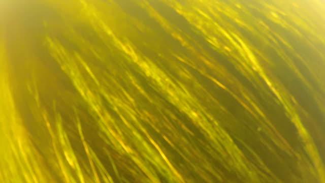 Unterwasser Gras.