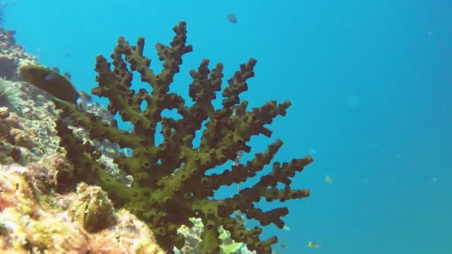 vídeos de stock e filmes b-roll de underwater green cup coral (tubestrea micrantha) on coral reef - acidificação dos oceanos