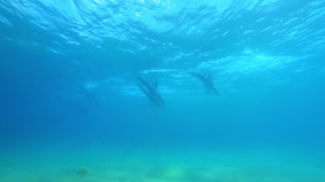 vídeos de stock e filmes b-roll de underwater group of bottlenosed dolphins synchronised dive in surf  - cetáceo