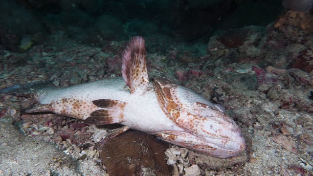 underwater grouper - ocean acidification stock videos & royalty-free footage