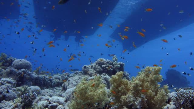 underwater in sharm el sheikh