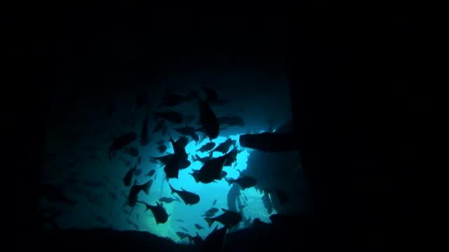 vídeos de stock, filmes e b-roll de f/s underwater, inside a wreck, fish silhouettes - ponto de vista de mergulhador