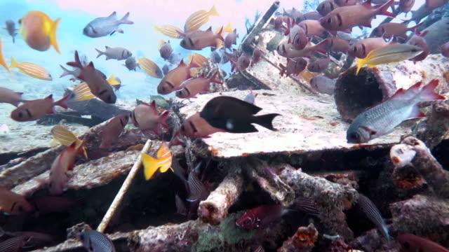 Underwater Junkyard