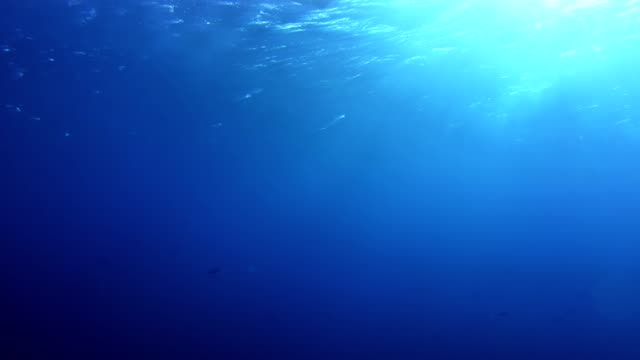 underwater life. blue deep - undersea stock videos & royalty-free footage