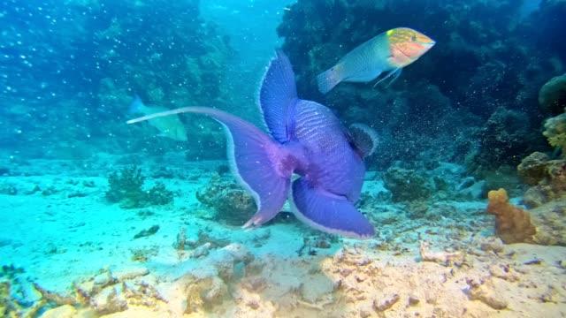 vídeos de stock, filmes e b-roll de vida subaquática. habitantes do recife coral - fundo do mar