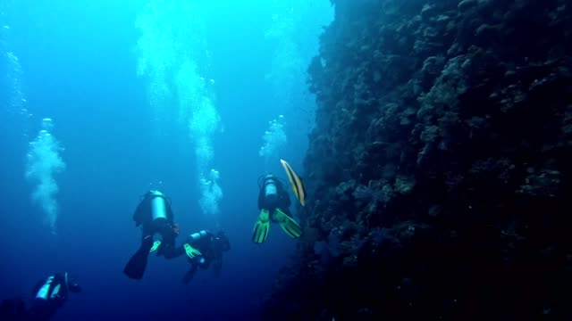 underwater life. diving in peaceful ocean - sea life stock videos & royalty-free footage