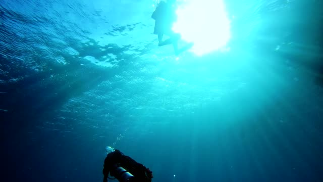 underwater life. diving in peaceful ocean - fondale marino video stock e b–roll
