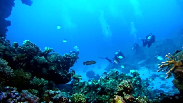 underwater life. diving near coral reef - undersea stock videos & royalty-free footage