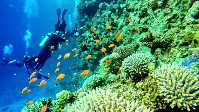 underwater life. diving near coral reef - sottomarino subacqueo video stock e b–roll