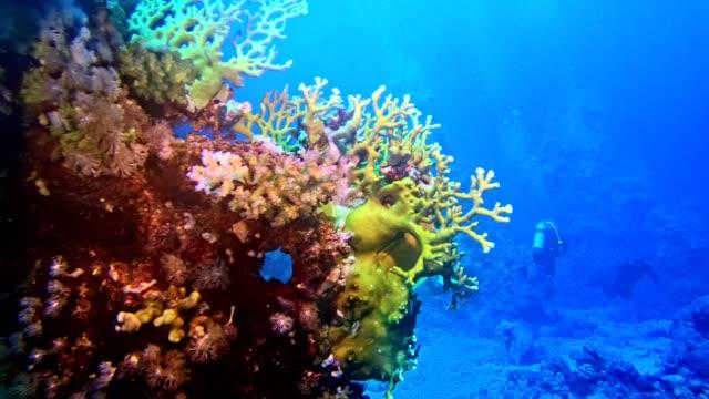 unterwasserleben. tauchen in der nähe des korallenriffs - unterer teil stock-videos und b-roll-filmmaterial