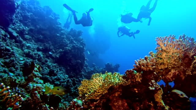 underwater life. diving near coral reef - snorkelling stock videos & royalty-free footage