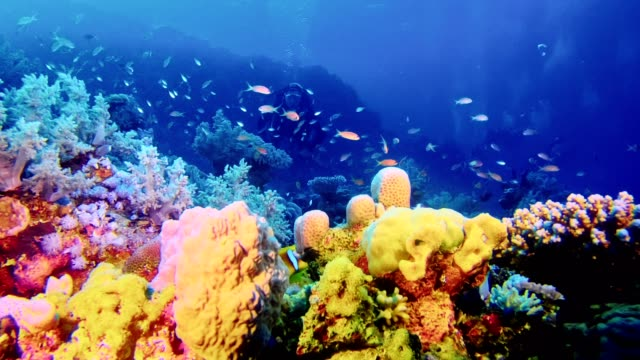 underwater life. diving near coral reef - seabed stock videos & royalty-free footage