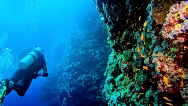 underwater life. diving near coral reef - fondale marino video stock e b–roll
