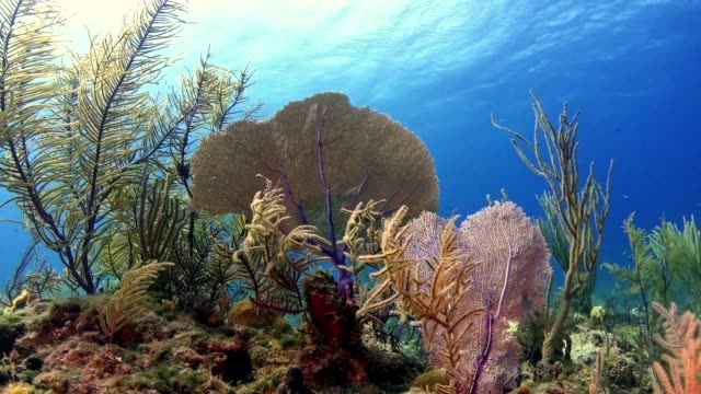 underwater life. multi colored coral reef - seaweed stock videos & royalty-free footage