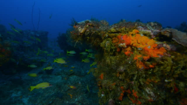 underwater lit reef with shoals of fish swimming around - エンゼルフィッシュ点の映像素材/bロール