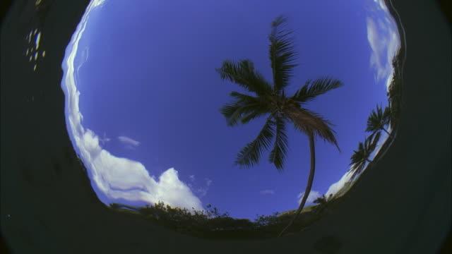 vidéos et rushes de slo mo cu la underwater looking up at palm tree, waves distorting image / moorea, tahiti, french polynesia - moorea