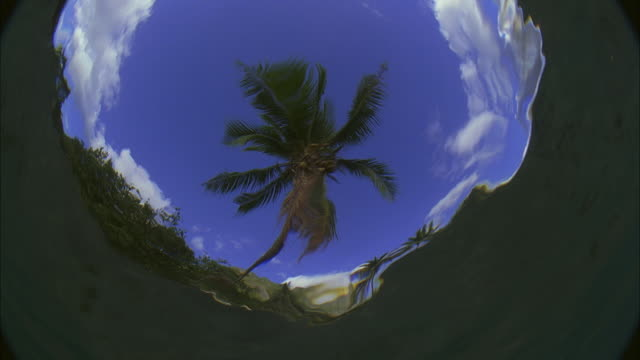slo mo cu la underwater looking up at palm tree, waves distorting image / moorea, tahiti, french polynesia - tahiti stock videos and b-roll footage