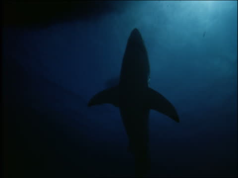underwater low angle silhouette of shark in ocean - 2001 stock videos and b-roll footage
