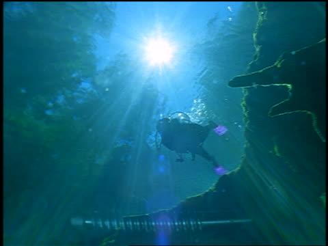 underwater low angle pan silhouette of woman scuba diving near rocks with sun + trees above / sun rays through water - 潜水ボンベ点の映像素材/bロール
