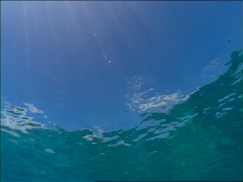 vidéos et rushes de underwater low angle pan of sun shining through water / waimea, hawaii - angle de prise de vue