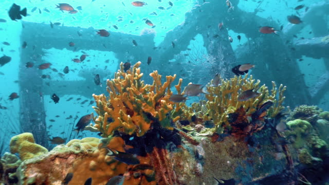 underwater man made coral reef nursery, phi phi island, thailand - ocean acidification stock videos and b-roll footage