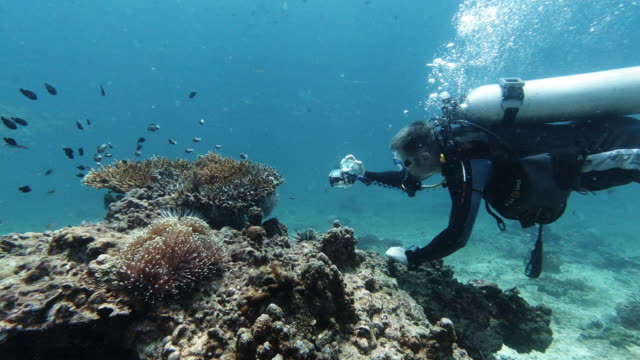 underwater marine biologist scientist taking photographic survey of coral bleaching whilst scuba diving - water pollution stock videos & royalty-free footage