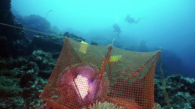 vídeos de stock e filmes b-roll de underwater marine biologists scuba diving for scientific environmental research project on coral reef - acidificação dos oceanos