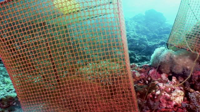 vídeos de stock e filmes b-roll de underwater marine biology scientific environmental research laboratory - acidificação dos oceanos