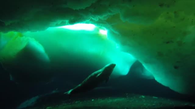 underwater marine life and biologist, antarctica - antarctica video stock e b–roll