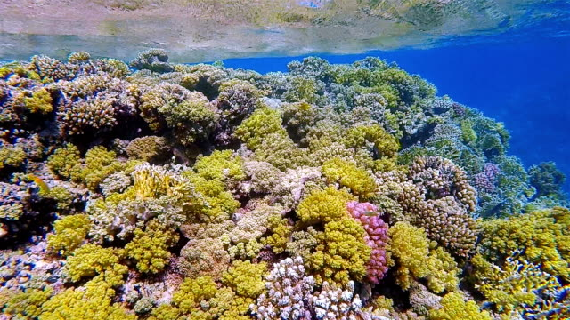 Underwater on beautiful coral reef with lot of tropical Fish in Red Sea nearby Marsa Alam