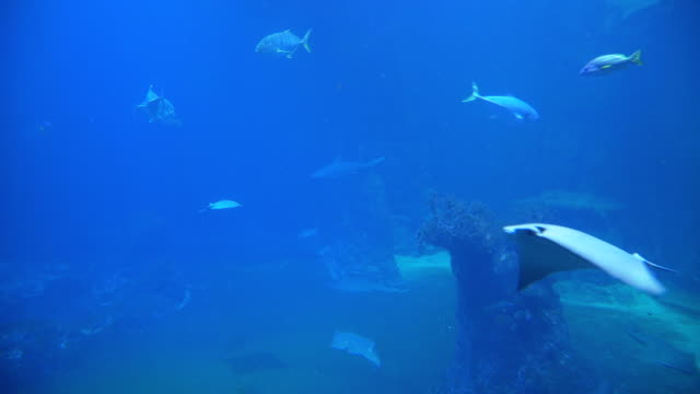 underwater on ground level with shark and stingray - stingray stock videos and b-roll footage