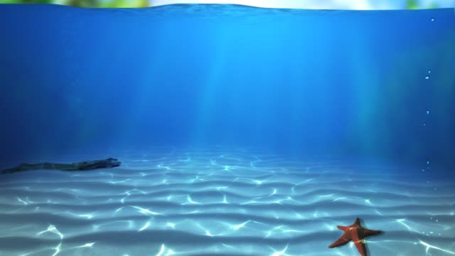 vídeos de stock, filmes e b-roll de paraíso 2 hd subaquáticos - estrela do mar