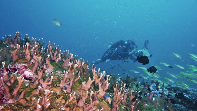 underwater photographer photographing vibrant coral reef thailand - underwater camera stock videos & royalty-free footage