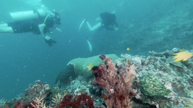 underwater photographer scuba diving on coral reef phi phi thailand - underwater camera stock videos & royalty-free footage