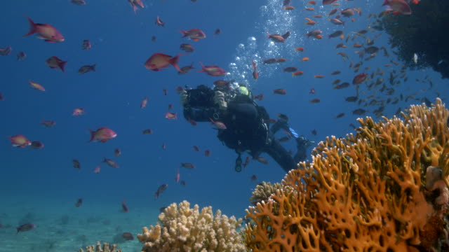 underwater photographer - filming stock videos & royalty-free footage