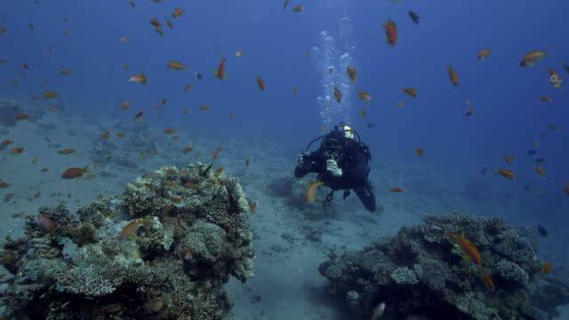 stockvideo's en b-roll-footage met underwater photographer - onderwatercamera