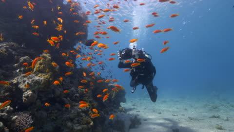 underwater photographer - filma bildbanksvideor och videomaterial från bakom kulisserna