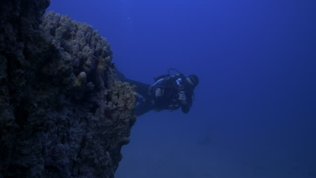 underwater photographer - red sea stock videos & royalty-free footage