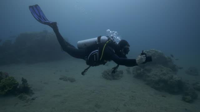 underwater photographer - cinematographer stock videos & royalty-free footage