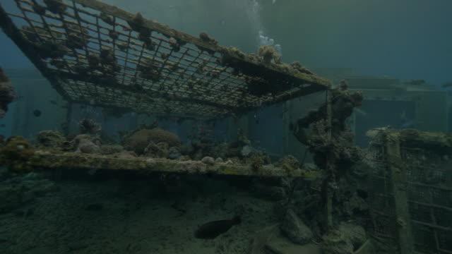 underwater photographer - unterwasserkamera stock-videos und b-roll-filmmaterial