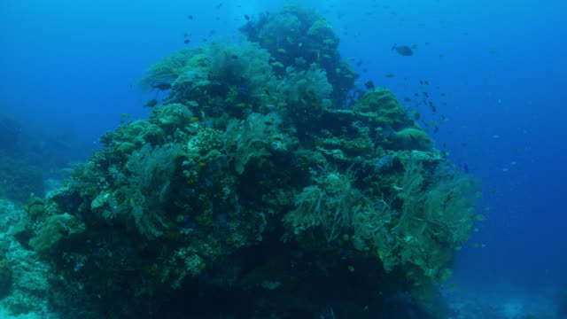 underwater pinnacle rock with coral and glass fish - glass fish stock videos & royalty-free footage