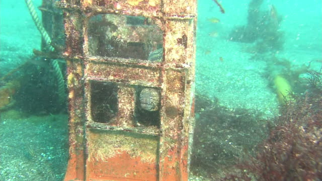 underwater, plastic containers and moray eel, izu oshima, japan - plastic container stock videos and b-roll footage