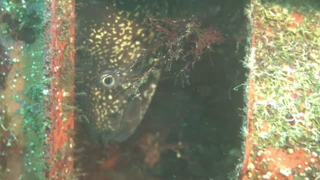 vídeos de stock, filmes e b-roll de underwater, plastic containers, izu oshima, japan - molusco invertebrado