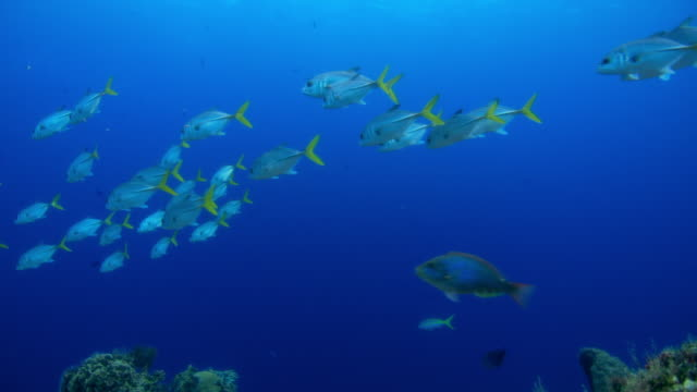 underwater point of view school of tropical fish swimming around coral reef - tropischer fisch stock-videos und b-roll-filmmaterial