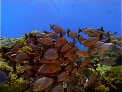 vídeos de stock e filmes b-roll de underwater point of view toward school of grey fish near ocean floor - oceano pacífico do sul