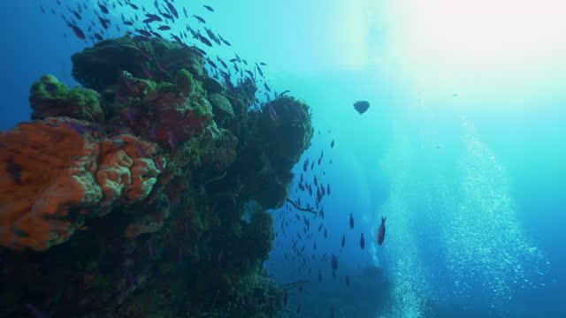 underwater, pov, a school of fish next to a coral reef, the bahamas - bahamas stock videos & royalty-free footage