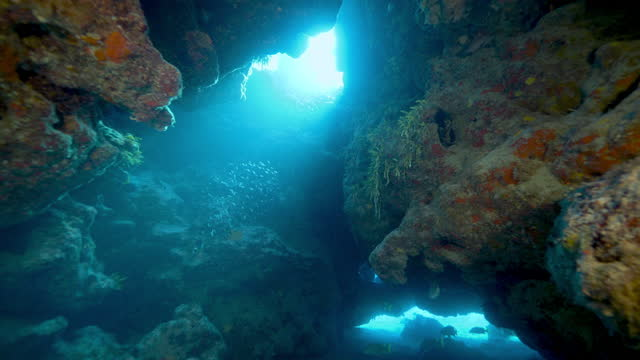 underwater, pov, swimming between coral reef formations, the bahamas - cave stock videos & royalty-free footage