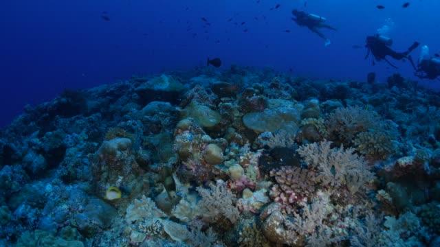 vídeos de stock, filmes e b-roll de corais debaixo d'água, canto azul, palau - deep sea diving