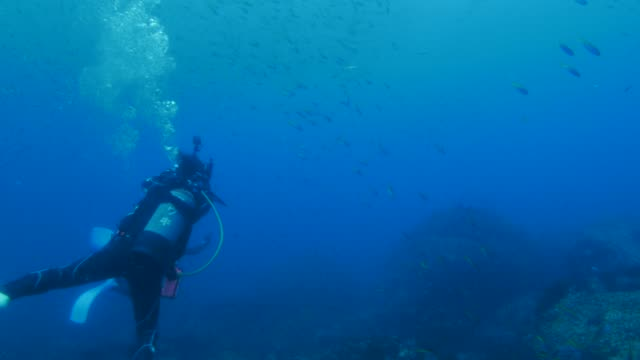 underwater reef, japan - scuba diving stock videos & royalty-free footage