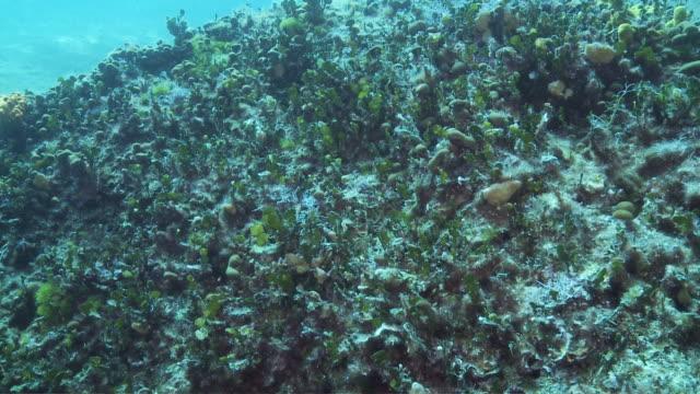stockvideo's en b-roll-footage met ds underwater reef / pag, island of pag, croatia - breedbeeldformaat